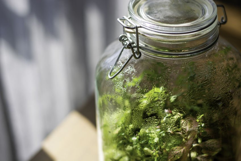 Condensation collects on the inside of a jar terrarium