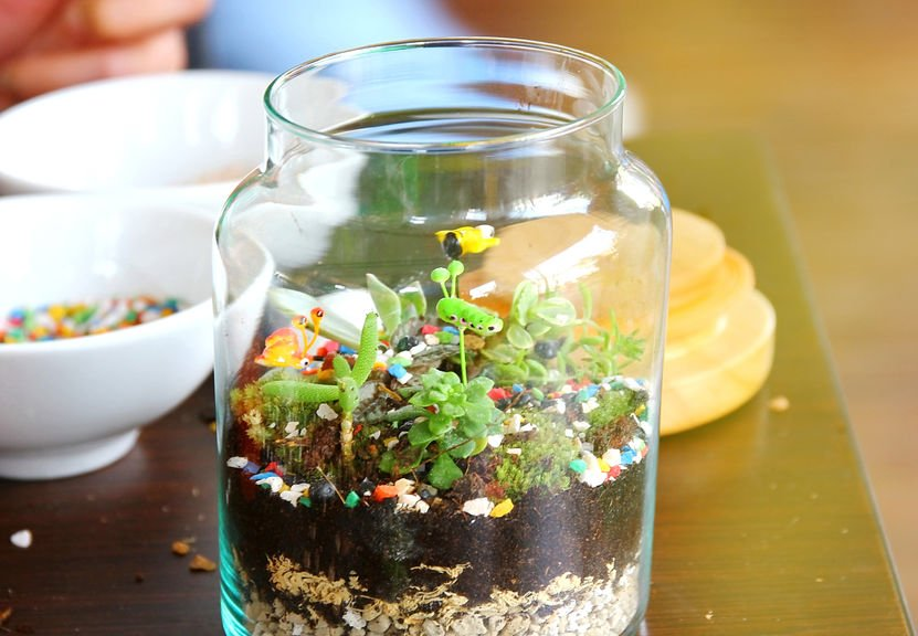 How To Make A Terrarium In Jar, Large Glass Terrarium Jars