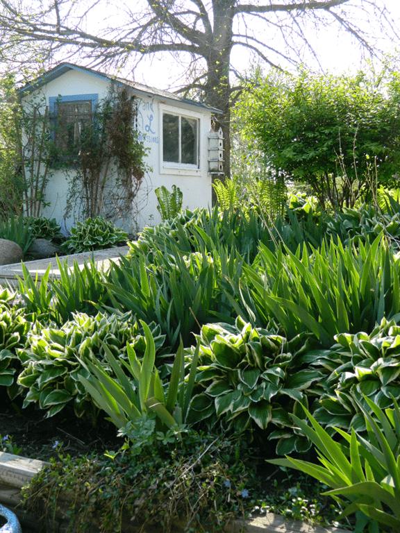 hosta_iris_garden.png