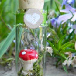 Toadstool mini terrarium