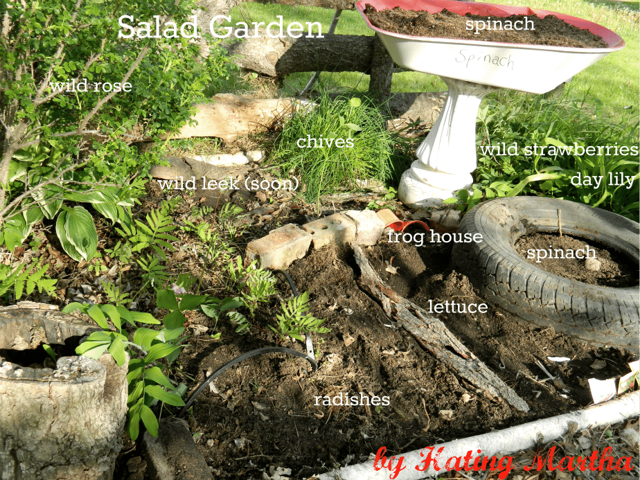 My salad garden and kid's farmers market