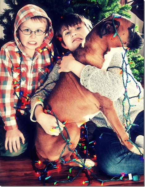 christmas photo 2012 v.2