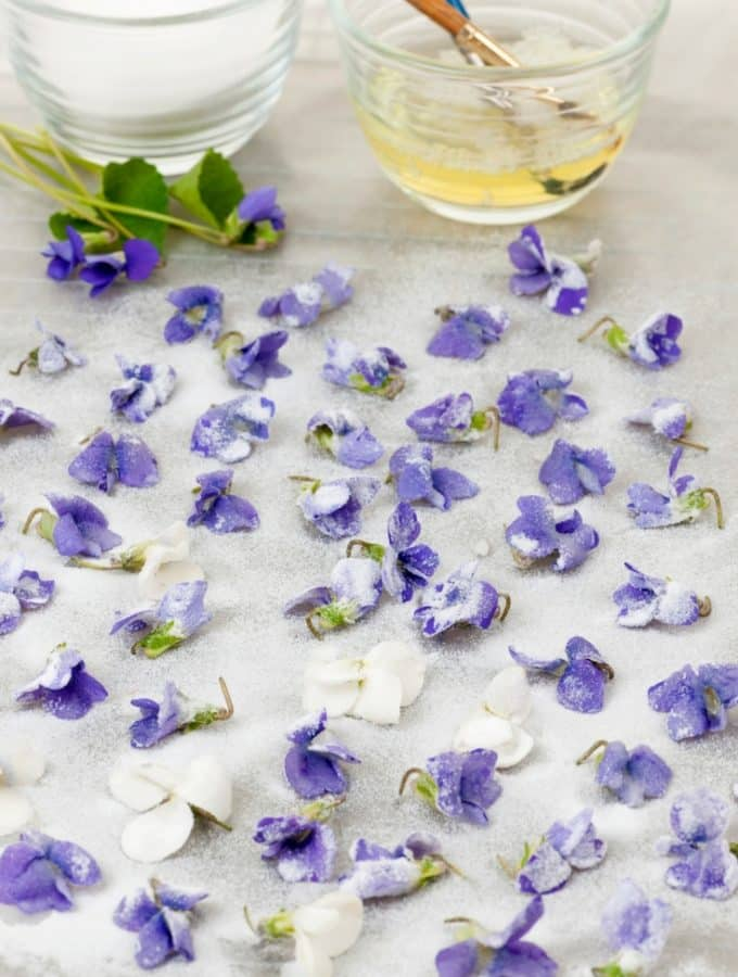 how to make candied flowers. Making sugared petals is very easy to do!