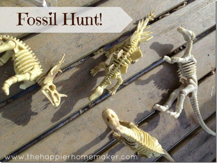 fossil-hunt
