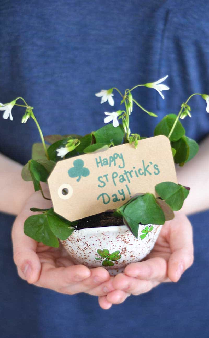 You'll love that this craft is easy, fast, and clean-up is a breeze. Plant shamrock (clover) plants in their planters and send them out to gift them to the neighbors. Cutest little gifts you've ever seen! Don't feel tempted to pick up those cute little plants you see in the grocery store. This project is SO much more personal and adorable!