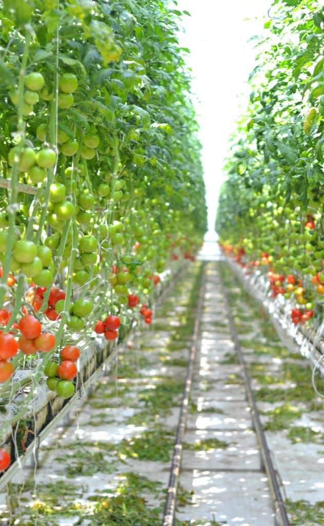 bushel boy farms2