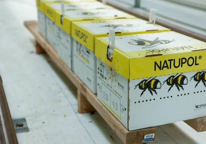 bushel boy hives-800