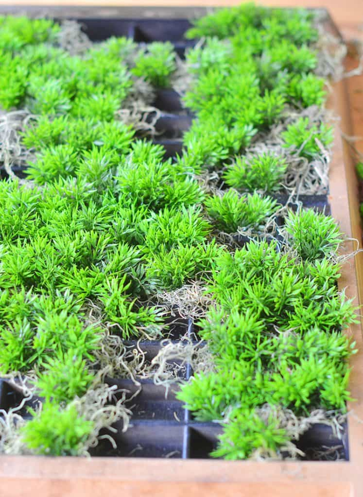 succulent-planter-10