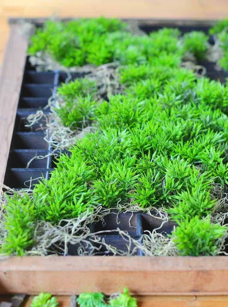 succulent-planter11