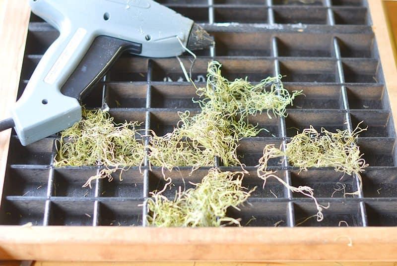 succulent-planter5