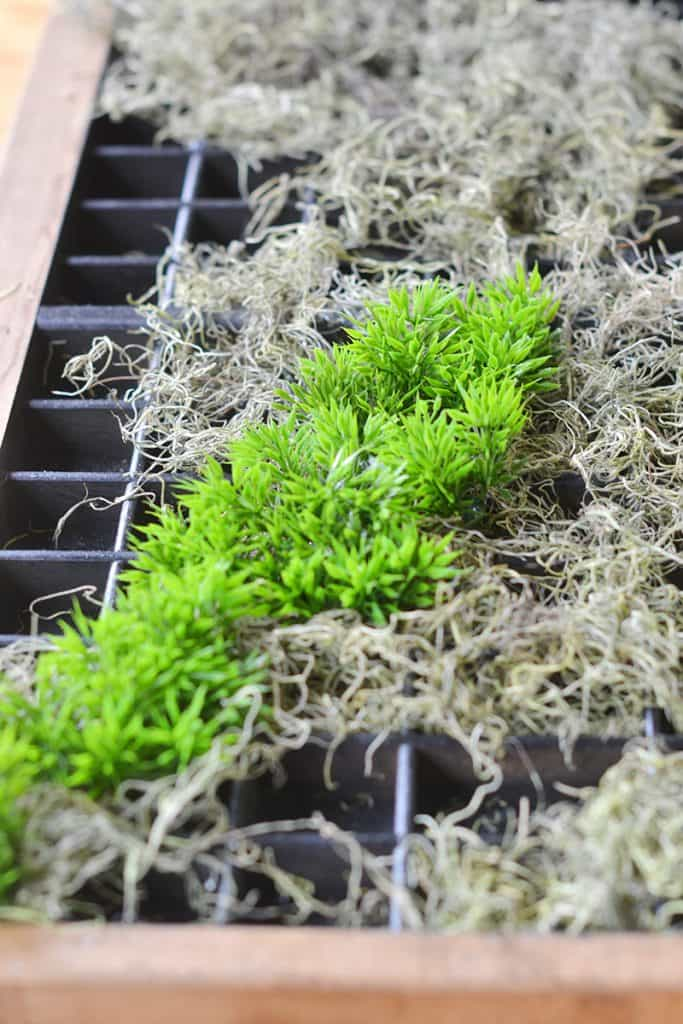 succulent-planter6