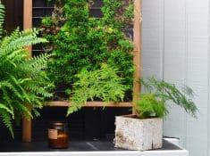 vertical-succulent