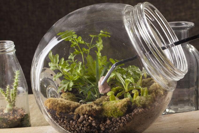Using tweezers for making a mason jar terrarium